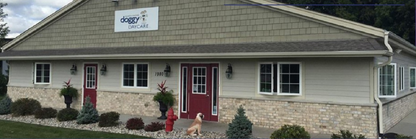 NSDD- North Shore Doggy Daycare - Dogs Are Special Facility